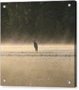 Blue Heron Morning Acrylic Print