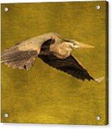 Blue Heron On Gold Acrylic Print