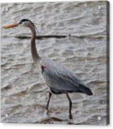 Blue Heron  On The Lake Acrylic Print
