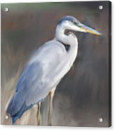 Blue Heron Painting  Acrylic Print by Don  Wright