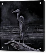 Blue Heron Pose Acrylic Print