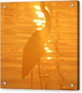Blue Heron Sunrise Acrylic Print