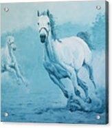 Blue Horses Acrylic Print
