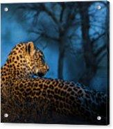 Blue Hour Leopard Acrylic Print