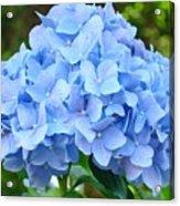 Blue Hydrangea Floral Art Print Hydrangeas Flowers Baslee Troutman Acrylic Print
