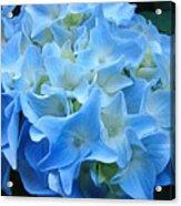Blue Hydrangea Floral Flowers Art Prints Baslee Troutman Acrylic Print