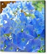 Blue Hydrangea Flowers Art Prints Summer Hydrangeas Baslee Acrylic Print