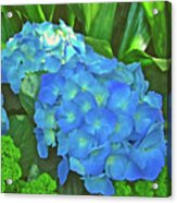Blue Hydrangea In Bellingrath Gardens In Mobile, Alabama2 Acrylic Print