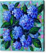 Blue Hydrangeas - Abstract Floral Composition Acrylic Print