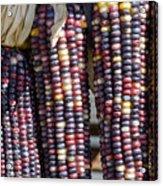 Blue Indian Corn Acrylic Print
