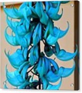 Blue Jade Strand Acrylic Print
