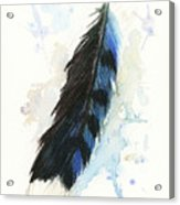 Blue Jay Feather Splash Acrylic Print by Brandy Woods