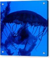 Blue Jelly Fish Acrylic Print