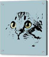 Blue Kitten Portrait Acrylic Print