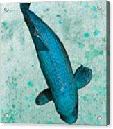 Blue Koi Acrylic Print