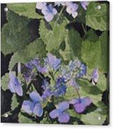 Blue Lace Acrylic Print