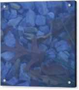 Blue Leaf Acrylic Print