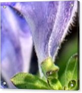 Blue Lupine Flower - 4 Of 5 Shots Acrylic Print