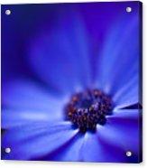 Blue Acrylic Print