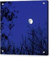 Blue Moon Among The Tree Tops Acrylic Print