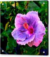 Blue Moon Hibiscus Acrylic Print
