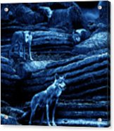 Blue Moon Wolf Pack Acrylic Print