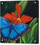 Blue Morph  Acrylic Print