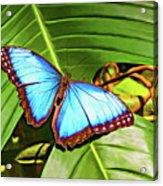 Blue Morpho Butterfly 2 - Paint Acrylic Print