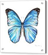 Blue Morpho Butterfly Acrylic Print