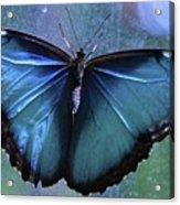 Blue Morpho Butterfly Portrait Acrylic Print