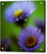 Blue On Green 2 Acrylic Print
