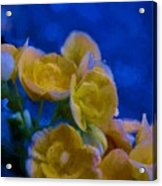 Yellow On Blue Acrylic Print