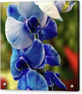 Blue Orchid Acrylic Print
