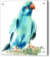 Blue Parrot Bird Acrylic Print