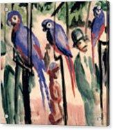 Blue Parrots Acrylic Print