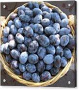 Blue Plums Acrylic Print