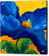 Blue Poppy Acrylic Print by Marion Rose