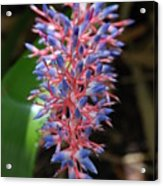 Blue Red Plant Acrylic Print