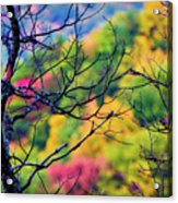 Blue Ridge Autumn Acrylic Print