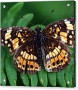 Blue Ridge Butterfly Acrylic Print