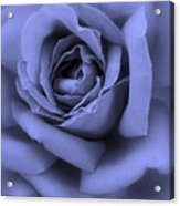 Blue Rose Abstract Acrylic Print