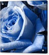 Blue Rose Acrylic Print