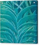 Blue Sago Acrylic Print