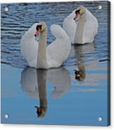 Blue Sky And Two Swans Acrylic Print