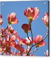 Blue Sky Art Prints Pink Dogwood Flowers 16 Dogwood Tree Art Prints Baslee Troutman Acrylic Print