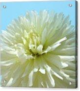 Blue Sky Art White Dahlia Flower Floral Prints Baslee Troutman Acrylic Print