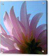 Blue Sky Floral Art Print Pink Dahlia Flower Baslee Troutman Acrylic Print