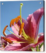 Blue Sky Florals Art Pink Calla Lily Blooming Baslee Troutman Acrylic Print