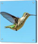 Blue Sky Hummingbird Acrylic Print