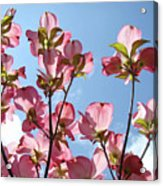 Blue Sky Landscape White Clouds Art Prints Pink Dogwood Flowers Baslee Troutman Acrylic Print